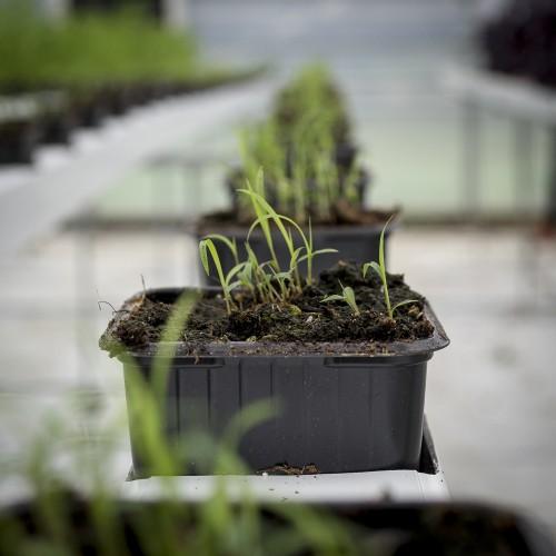 zioła ecobarra